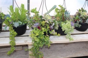 The Right Plants for Your Yard - Image 2