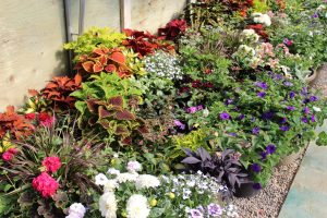 The Right Plants for Your Yard - Image 3