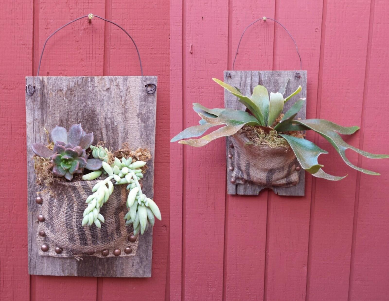 Fern and Succulent workshop