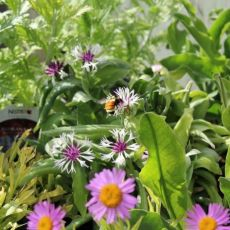 The Right Plants for Your Yard